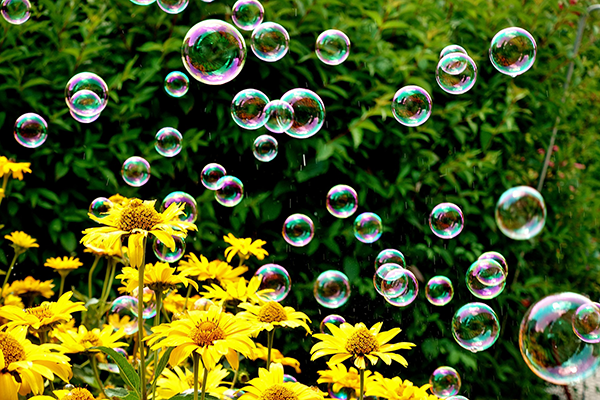 Soap bubbbles floating above spring flowers