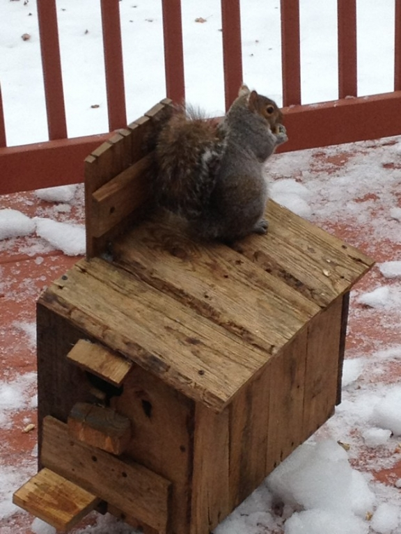 squirrel box made from pallets